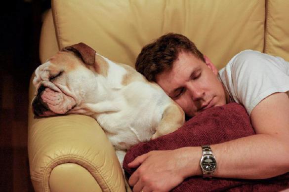 Пять причин, по которым собаки на нас обижаются. Пять причин, по которым собаки на нас обижаются