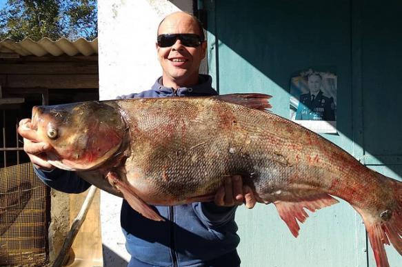 Рыбак на Ставрополье поймал метрового толстолобика. 393222.jpeg