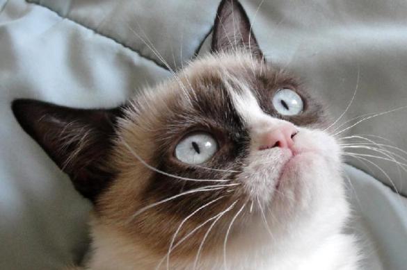 ВСША кошка отсудила 700 тыс. долларов заавторские права