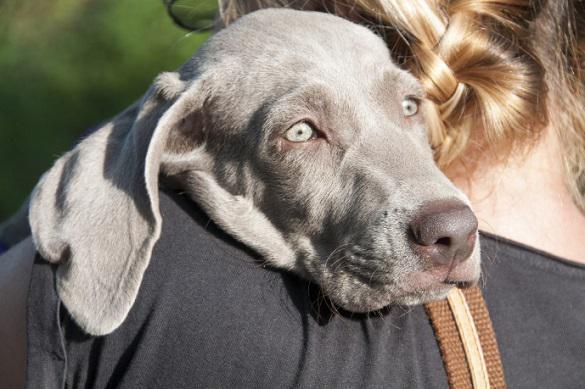 Как собаки могут помочь в борьбе с раком. 396223.jpeg