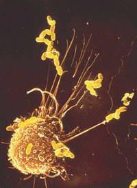 Задушевный разговор с клеткой