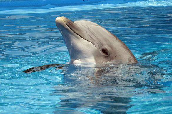 Узбекистан возмущен строительством дельфинария в столице. 376230.jpeg