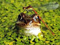 Два китайца получили срок за охоту на российских лягушек