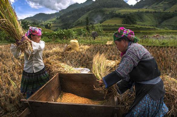 Вьетнам требует от Monsanto ответить за химатаки агентом