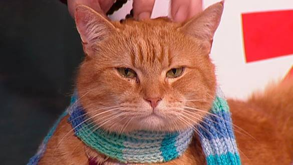 Кот попировал в аэропорту на 60 000 рублей. ВИДЕО. 306237.jpeg