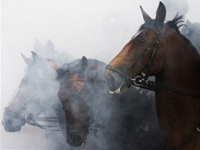 Десятки элитный лошадей заживо сгорели в Башкирии. 272240.jpeg