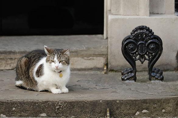 В Нижнем Новгороде застройщик примет на работу кота. В Нижнем Новгороде застройщик примет на работу кота