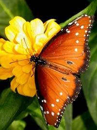 Крылья бабочки вместо солнечной батареи
