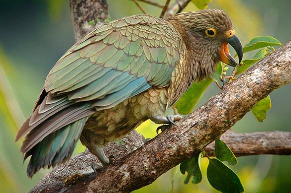 Орнитологи разгадали, почему птицы собирают окурки