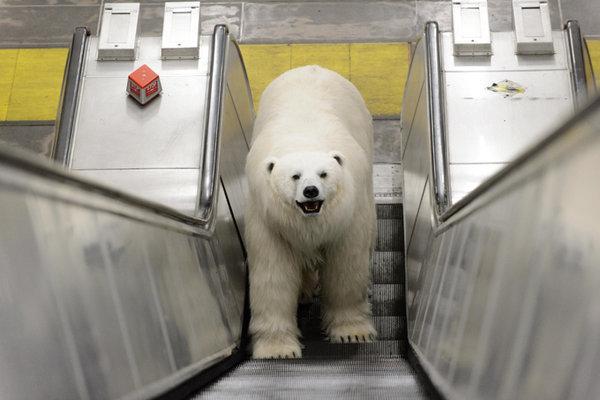 Черные медвежата во всех мусорных баках штата Аляска: как звери ищут пищу в городах. 317244.jpeg