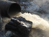 Импортные бактерии займутся очисткой петербургских сточных вод