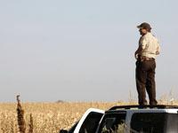 Супруги заблудились в кукурузном лабиринте в США. pole