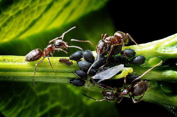 Ученые обнаружили новый вид муравьев-камикадзе. 386250.jpeg