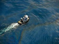 На восстановление Мексиканского залива ВР выделит миллиард долларов. 236252.jpeg
