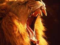 Объектом поклонения древних людей были гигантские львы