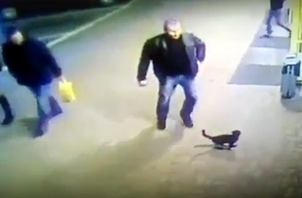 В Белоруссии милиционер пнул котенка и вылетел из органов. В Белоруссии милиционер пнул котенка и вылетел из органов