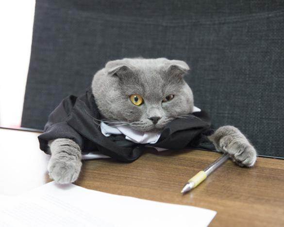 Старый кот стал боссом румынской компании. Старый кот стал боссом румынской компании