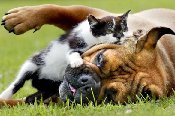 Кто умнее - хозяева кошек или хозяева собак?. 398259.jpeg