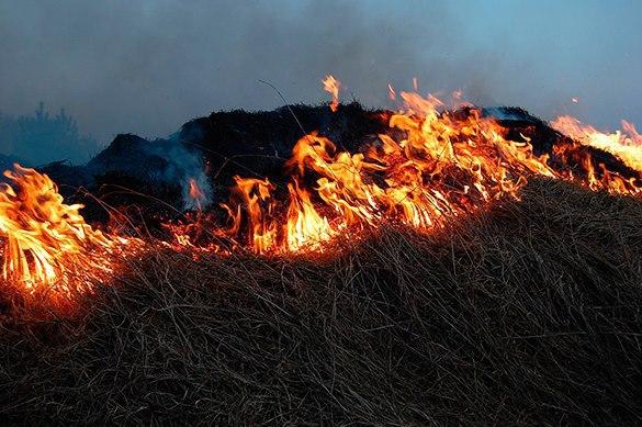 Больше 34 тыс га леса горит в Сибири и на Дальнем Востоке