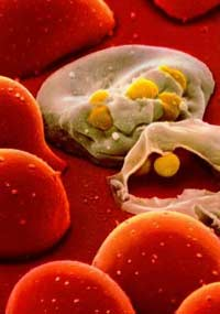 От ВИЧ человека освободят разбуженные гены