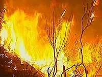 К Марселю вплотную подобрался лесной пожар