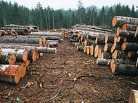 Экспорт российского леса упал почти наполовину