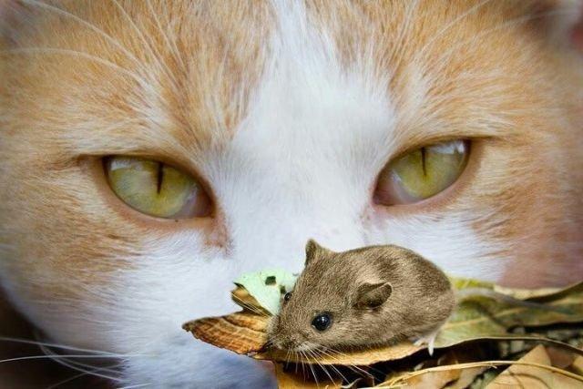 Зомби среди животных: изумрудная оса и кошачьи паразиты. 404272.jpeg