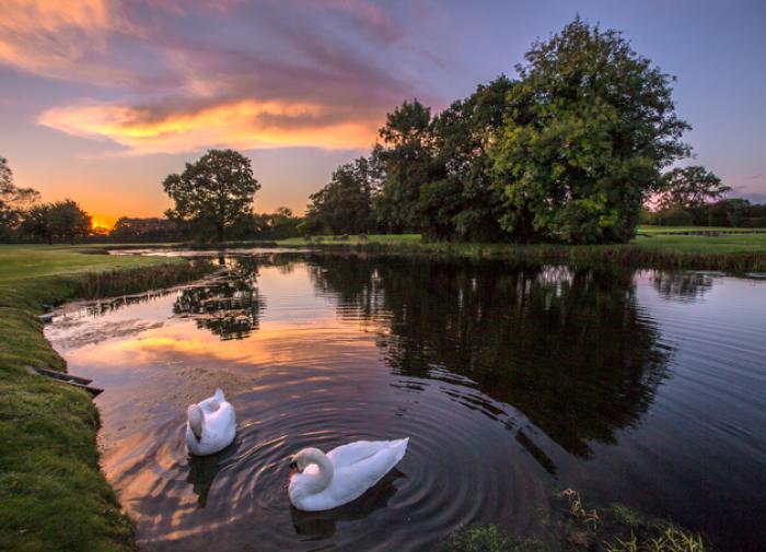 Закат. Лебеди