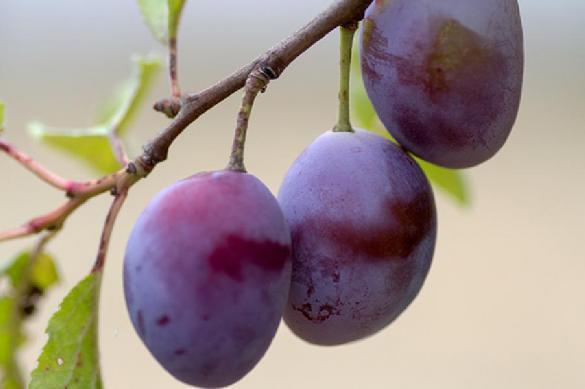 Назван фрукт, помогающий в защите от рака. 390276.jpeg