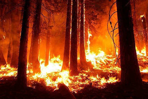 30 тыс га леса горит в Забайкалье