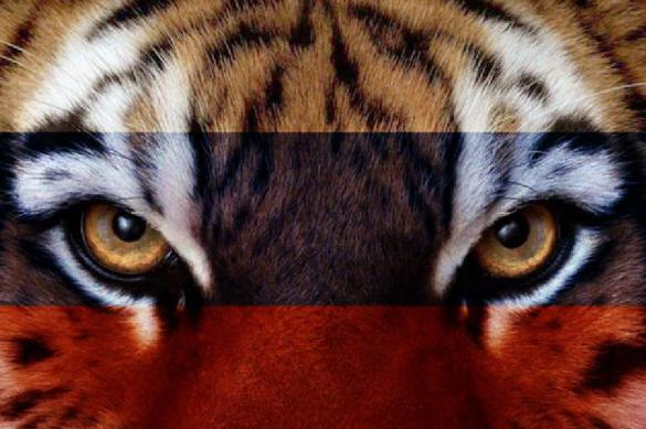Кудрин сравнил правительство с тигром, который вот-вот прыгнет. 387277.jpeg