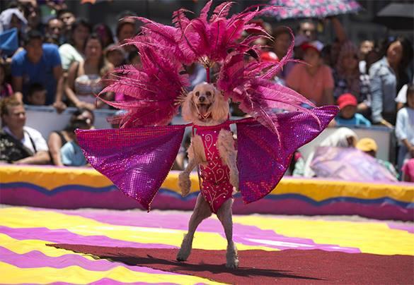 Мексиканские цирки остались без зверей. 320278.jpeg