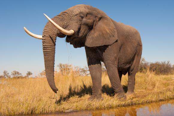 В Китае дикий слон напал на деревню и затоптал крестьянку. В Китае дикий слон напал на деревню и затоптал крестьянку