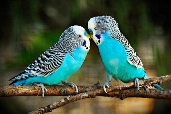 Руководство по обучению попугаев для начинающих. Часть 2. 394286.jpeg