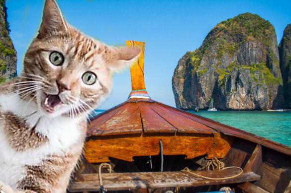 Поляк и его верный кот провели 7 месяцев посреди Индийского океана. Поляк и его верный кот провели 7 месяцев посреди Индийского океа