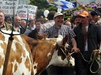 Бельгийские фермеры бесплатно раздают прохожим молоко