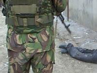 В Кабардино-Балкарии убиты боевики, находившиеся в розыске. 251295.jpeg
