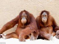 Врачам впервые удалось победить рак у обезьяны. 270297.jpeg