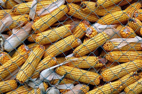 Китайцы нашли паразитов в украинском урожае