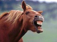 Лошадь задержала вора в Кузбассе. 236301.jpeg