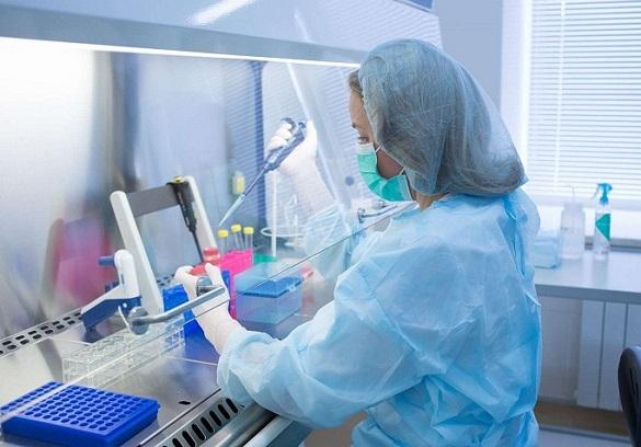 Ученые открыли белок, способствующий росту мышечных волокон сердца