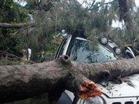 Около сотни деревьев повалены штормовым ветром в столице. 240302.jpeg