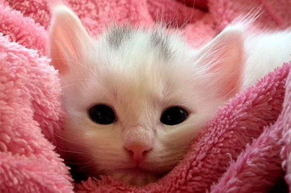 Ученые доказали, что кошки умеют лечить