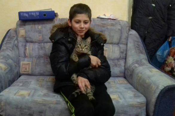 Бродячий кот помог ребенку, потерявшемуся по пути домой. 382303.jpeg