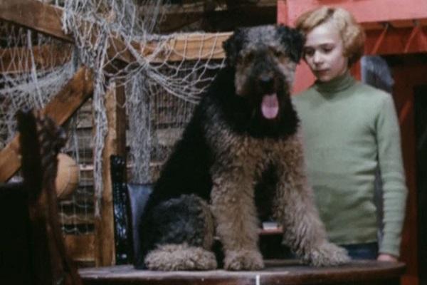 Четвероногие актеры: знаменитые собаки в кино. Рэсси и Электроник