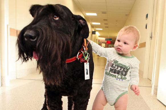 Животное и ребенок: за и против. 401306.jpeg