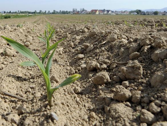 Энергетические амбиции США погубят фермеров. Энергетические амбиции США погубят фермеров