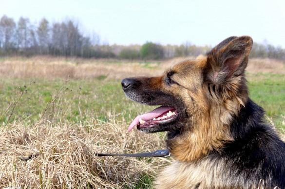 У собаки неприятный запах изо рта? Тому есть три причины. 395307.jpeg