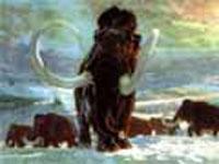 Найдены останки мамонта возрастом миллион лет
