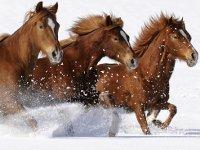 На Алтае от голода умирает огромный табун лошадей. 276309.jpeg